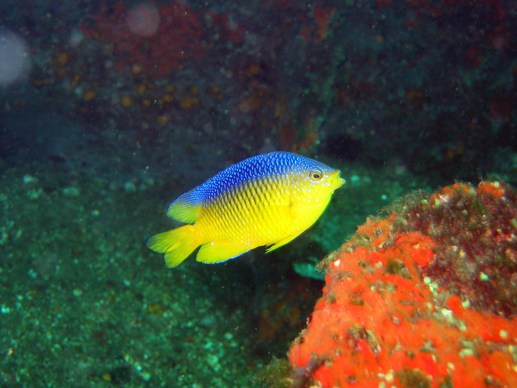 Underwater fish by phreakinb