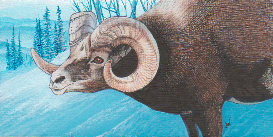 Bighorn Sheep Painting by 8lackbark