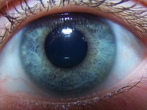 eyeballl