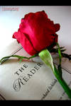 THE READER by artcreamz