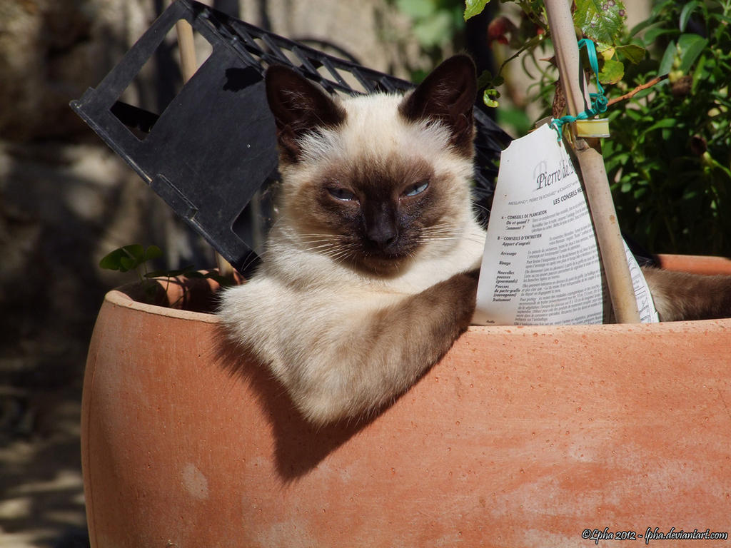 The Lazy Reading Cat by lpha