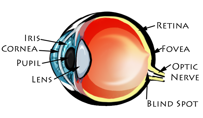 Diagrams of the eye to label images diagrams of the eye to label eye diagram ccuart Choice Image
