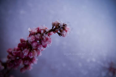 frost by Ingvill