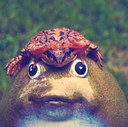 hi frog by Ingvill