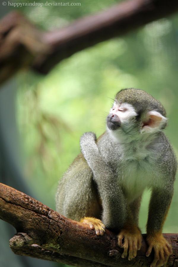 Squirrel monkey by HappyRaindrop