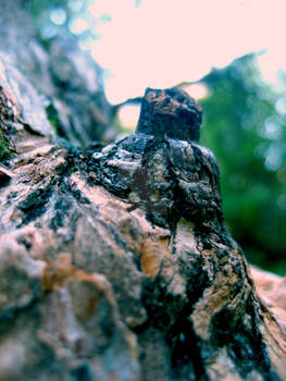 Lump of tree