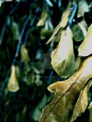 Dried Leaves 1