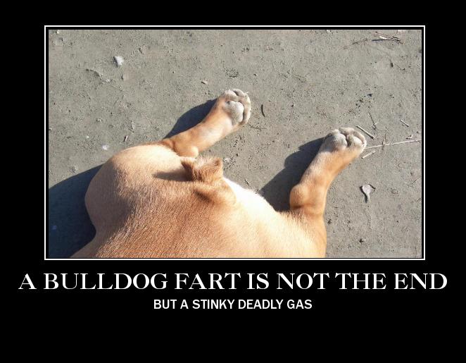 Bulldoggenliebchen's Profile Picture