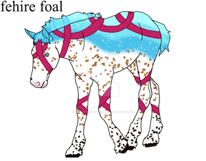 fehire foal Kylacloughley