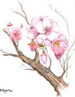 blossoms by kracken