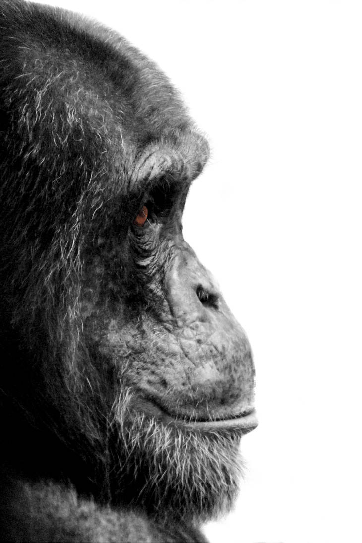 Evolution in Profile by wilder-trash