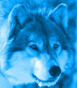 Zaitro's Profile Picture