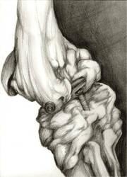 Bones by damphyr