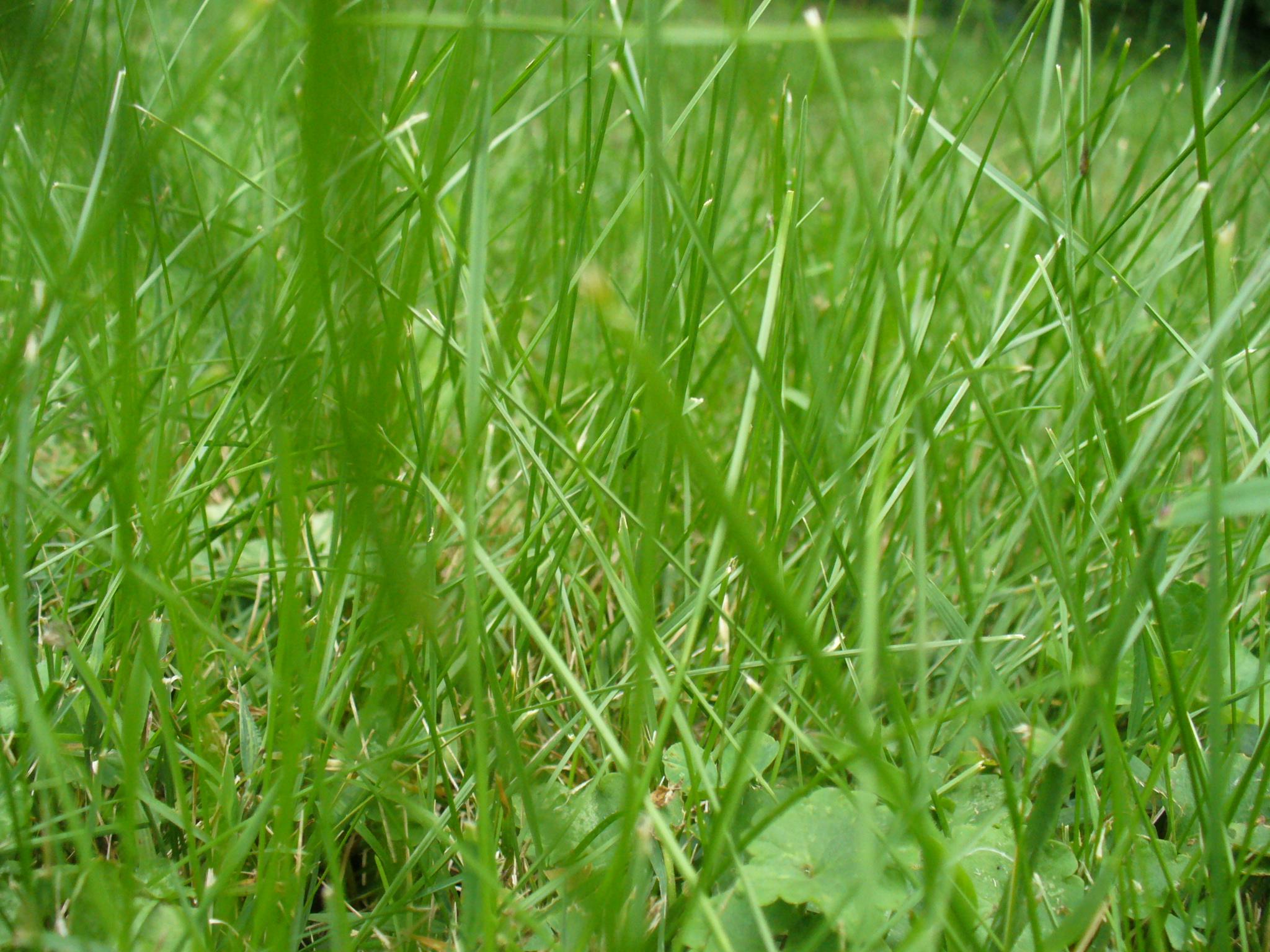 Texture: Grass