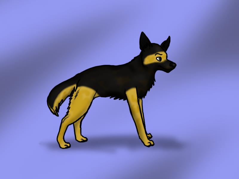 Wolfy's characters Wolfy987_German_Shepherd_by_Hiedidog