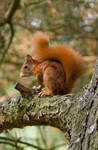 Angry Squirrel by RoterHesse