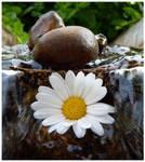 Waterflower.