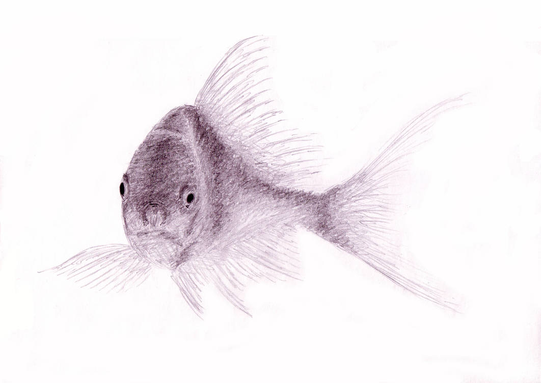 Pencil drawing of a fish by gregor06 on deviantart