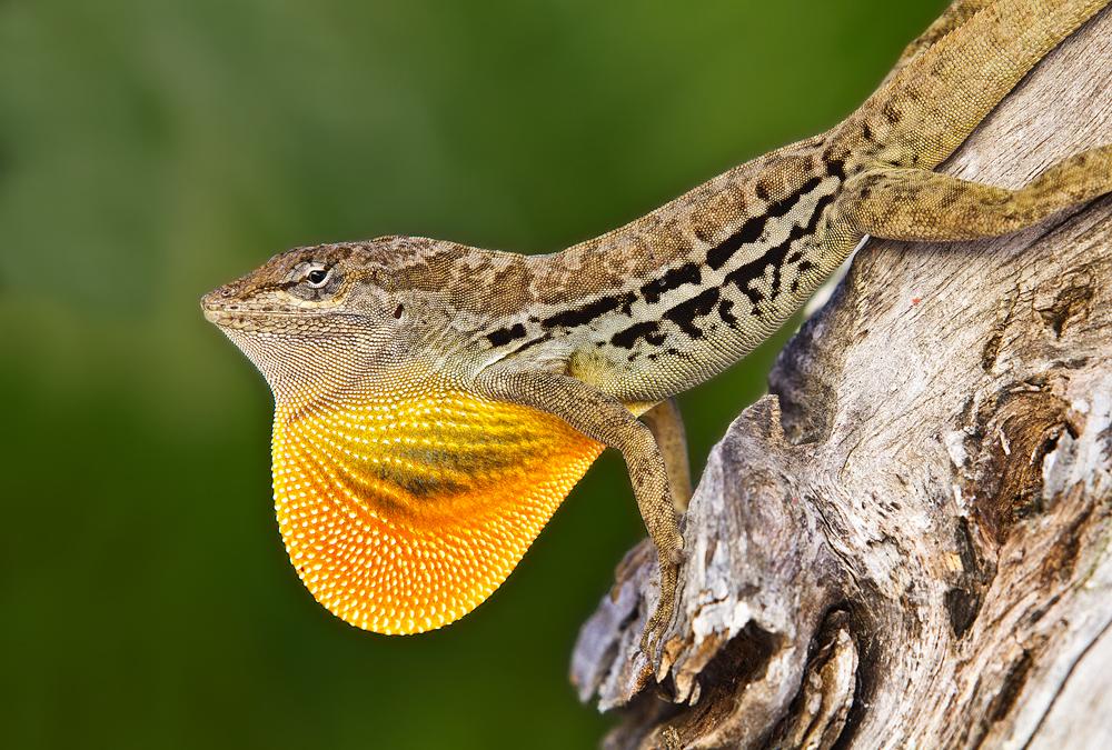 Aruba Anoli by Luftphoto