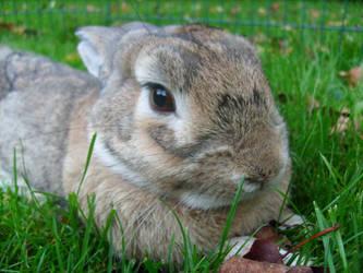 My rabbit by YlfaZophy