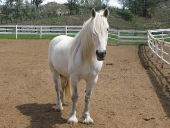Draft Horse 6 by Syeiraxx