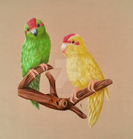 Kakariki parrots