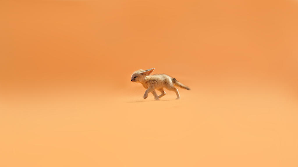 wallpaper fennec morocco resize 2560x1440 by povcam on