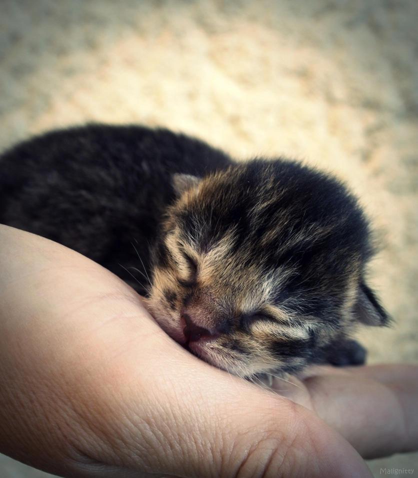 Cute. by Malignitty