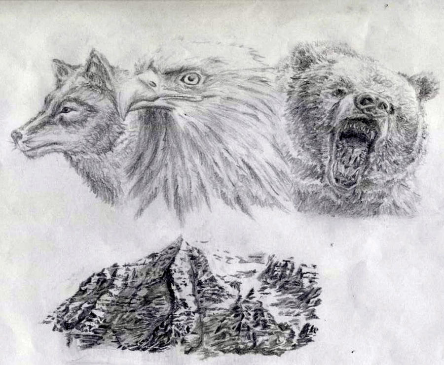 Image Result For Realistic Mountain Lion