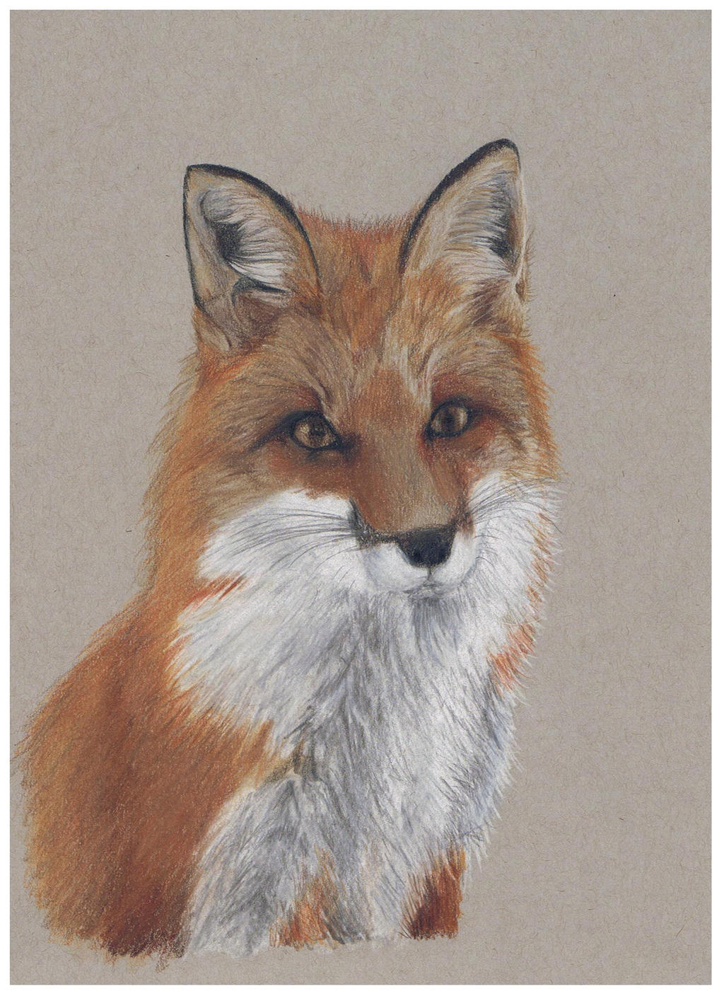 Fox portrait - colored pencil by miemotio
