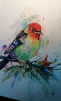 Colorfull Bird