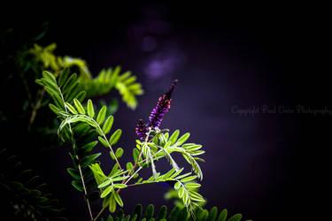 Sweet Night by PaulVonGore