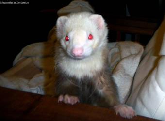 Little red eyes devil II by PaulVonGore