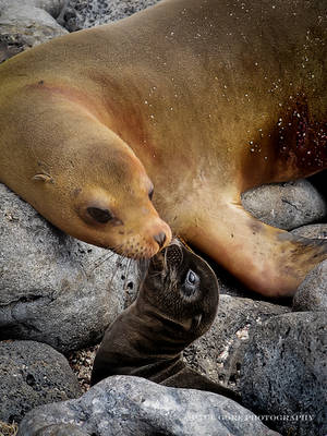 Galapagos-Mother's Love by PaulVonGore