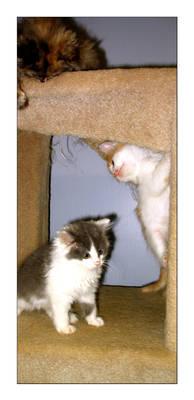 Escher Like Kitten Situation