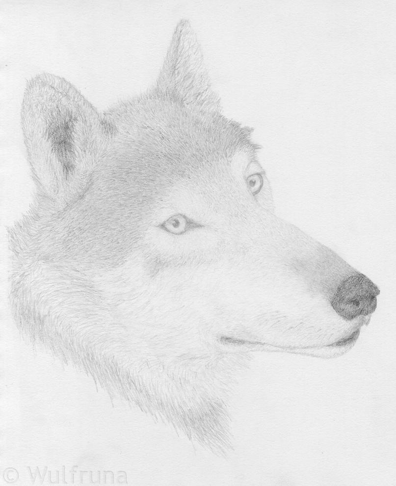 Надписью мне, картинки волка карандашом прикольные