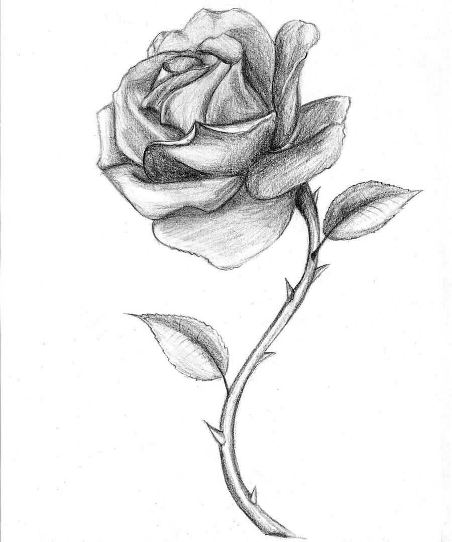 White Rose Drawing