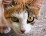 cat645