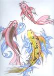 Koi Fish Studies