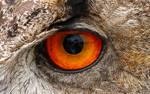 Got My Eye On You - Eagle Owl