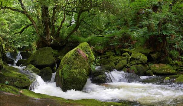 Golitha Falls Pano