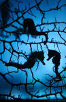 Seahorse Silhouettes by runique