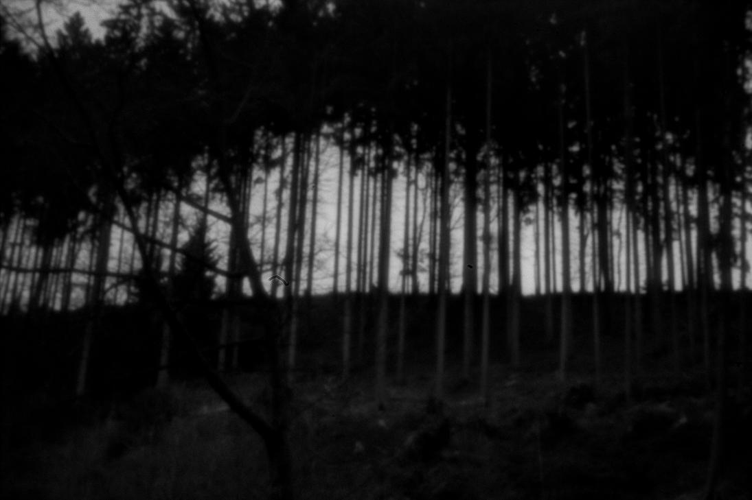 dark forest by Weltraumeule