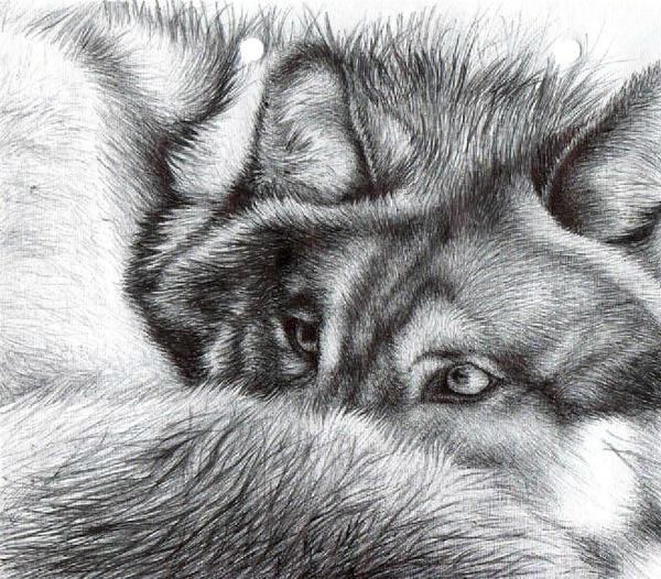 Wolf 2 - Ballpoint Pen by icepaw99
