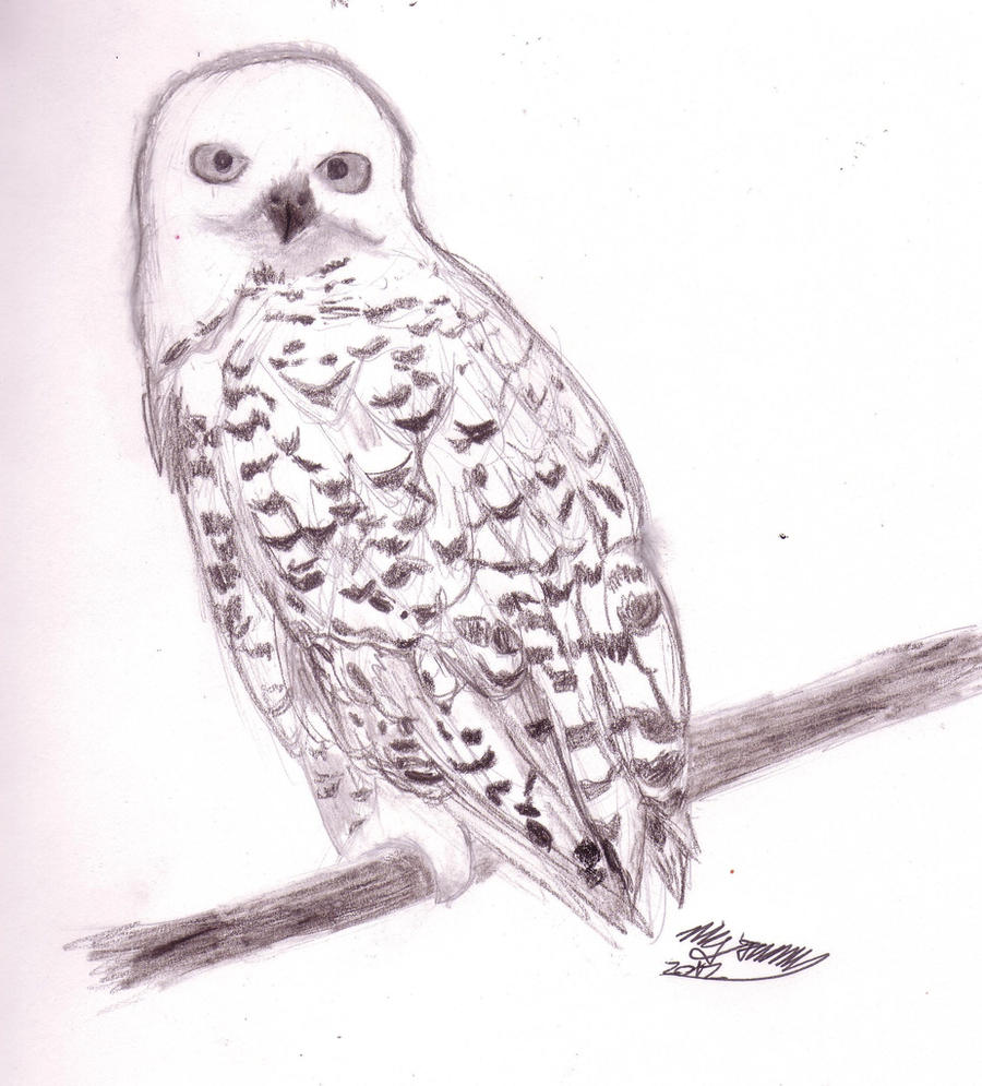 HP Hedwig~ By Katy12ML On DeviantArt