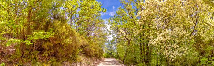 Nature Street
