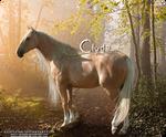 HP Quarter Horse #1