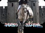 HP Irish Sport Horse #1