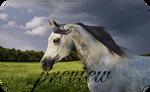 HP Arabian #3