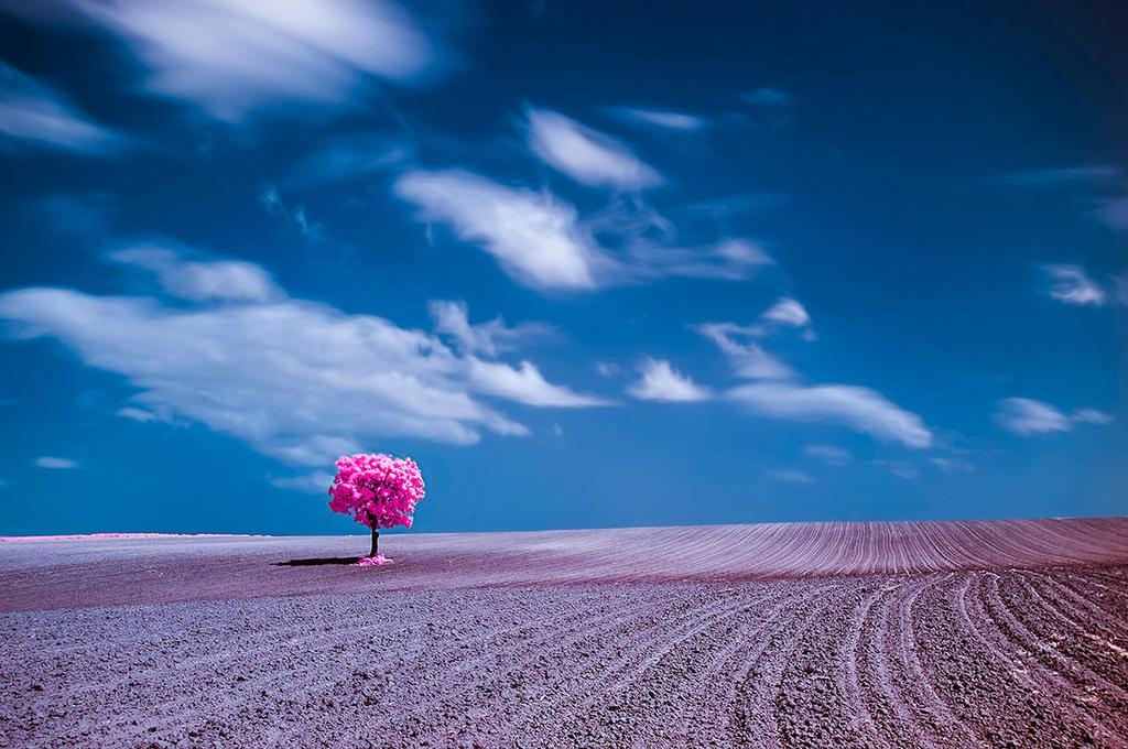 Solitude by Rizone